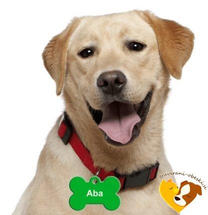zelen graviran obesek za psa
