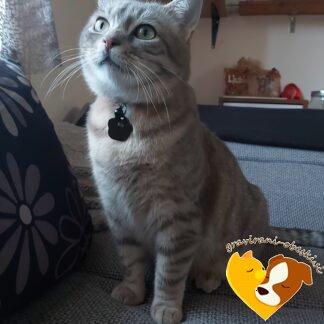 Obesek za mačko Tačka Ris