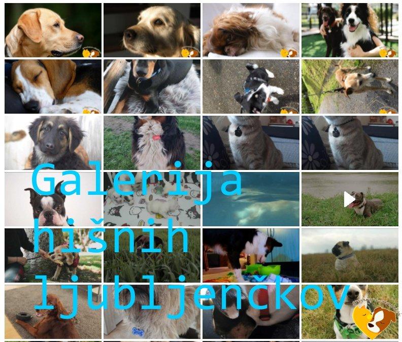 galerija hišnih ljubljenčkov obeski za pse